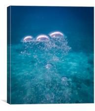 Divers and their bubbles in the ocean  on Curacao , Canvas Print