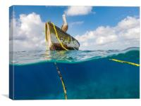 Swimming with fish and turtles Curacao views , Canvas Print