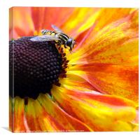 Hoverfly, Canvas Print