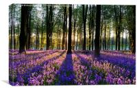 Bluebell Dawn - 1, Canvas Print
