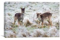 baby deer, first frost, Canvas Print