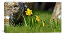 The colour of Spring, Canvas Print