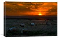 Wooly Sun Rise, Canvas Print