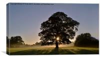 Morning Silhouettes , Canvas Print