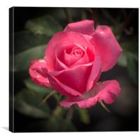 Rose for you, Canvas Print