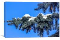 The branch of spruce and cones under snow, Canvas Print