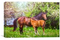 Mother horse with little foal, Canvas Print