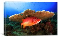 Underwater marine fish and coral reef, Canvas Print