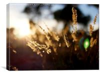 Grass in Gold, Canvas Print
