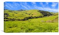 Green Meadow, Jalama Road CA, Canvas Print