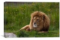 The King of all he surveys, Canvas Print
