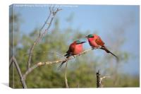 Sourthern carmine Bee Eaters, Canvas Print