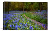 Blanket of Bluebells, Canvas Print