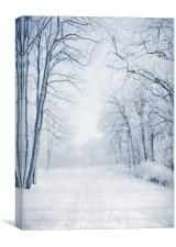Winter Path, Canvas Print