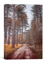 Path in a Woods, Canvas Print