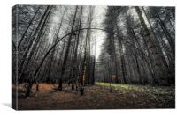Deep in Woods, Canvas Print