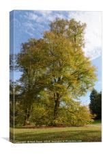 Tree with beautiful autumn colours at Nowton Park, Canvas Print