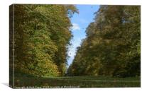Leaves falling in autumn at Lime Avenue, Nowton Pa, Canvas Print