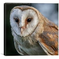 Barn Owl Portrait, Canvas Print
