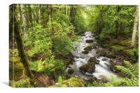 The Ardgartan Forest, Canvas Print