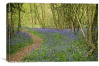 Clapham Woods Bluebells, Canvas Print