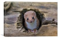 Weasel Watching, Canvas Print