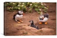 Puffin family, Canvas Print