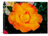 Yellow Rose of summer part 2, Canvas Print