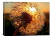 Dandelion Lightshade, Canvas Print