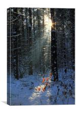 Forest Snow, Canvas Print