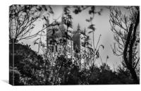 Beautifully Haunting in Mono.........., Canvas Print