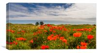 Poppies of Bamburgh, Canvas Print