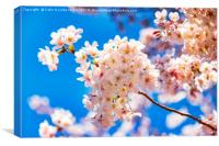 Cherry Blossom against a Bright Blue Sky, Canvas Print