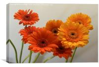 orange and yellow gerbera flowers, Canvas Print