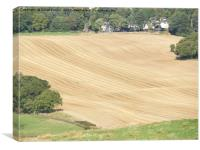 crop lines in wheat field near Linlithgow, West Lo, Canvas Print