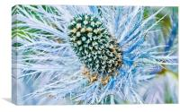 Eryngium flower, Canvas Print