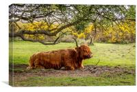 Highland Cow,New Forest,Hampshire, Canvas Print