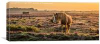 New Forest pony in the early morning light, Canvas Print