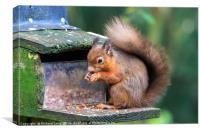 Red Squirrel , Canvas Print