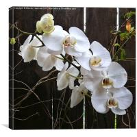 White Orchid , Canvas Print