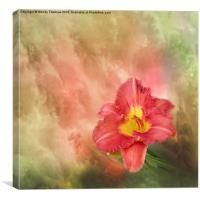 Red day lily growing in Queensland, Canvas Print