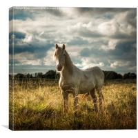 White Horse of Figham , Canvas Print