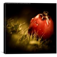 Red Berry with Raindrop, Canvas Print