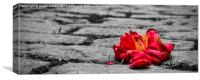 Lonely flower, Canvas Print