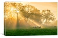 A new day's rays #1, Canvas Print