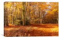 Autumn woodland trees in amazing colour, Canvas Print