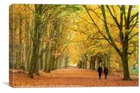Autumn walk in the woodland, Canvas Print