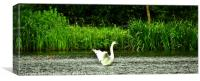 Swan on the lake, Canvas Print