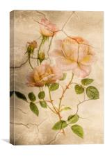 Vintage Shabby Chic Pale Pink Roses, Canvas Print