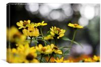 Yellow Blooms, Canvas Print